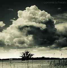 Cloud Pillows photo by corinne.schwarz