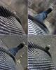 3549481597_6eca5be88b_t