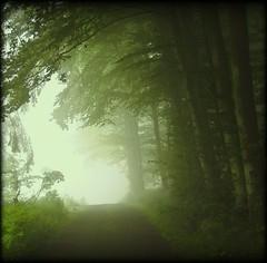 Weg zum Steinbruch - in the morning photo by NPPhotographie