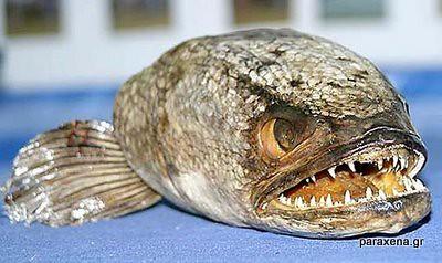 monster-look-fish11