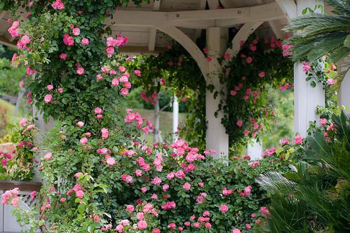 フラワーランドの薔薇園