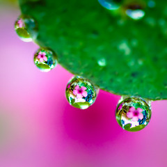 ...every raindrop carried a thought of you... photo by Geoff...