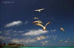 """Birds' View Of Layang Layang Island"" photo by Butch Javier  NAUI#48102"