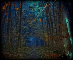 Elfenweg - path of fays photo by NPPhotographie