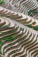 Rice fields, Longsheng, China photo by eyeCatchLight Photography