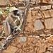 India_nature (8)