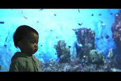 Aquarium photo by James Yeung