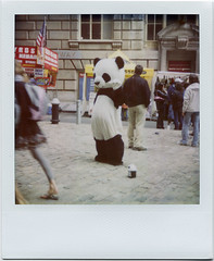 Pathetic Panda photo by davebias