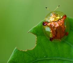A Bug's Life photo by Kausthub