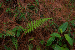 reforestacion_07