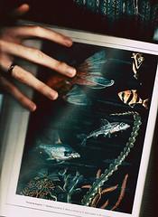 False Aquarium photo by yltsahg