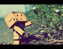 Danbo want's some Spring too photo by donchris!™