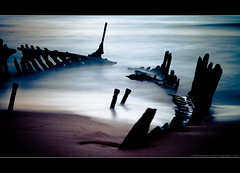 Stay Wild photo by Matthew Stewart | Photographer