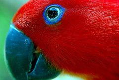 Red but Blue eye line photo by floridapfe