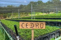 reforestacion_15