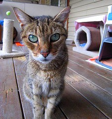 Asia - goodbye to a longtime shelter friend photo by Star Cat