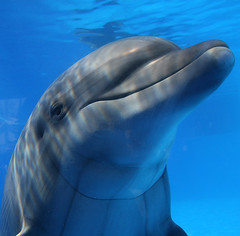 Smiling Dolphin photo by Eldad Hagar (Please support Hope For Paws)