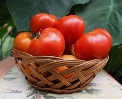 Tomato Growers Quiz #1 - ProProfs Quiz