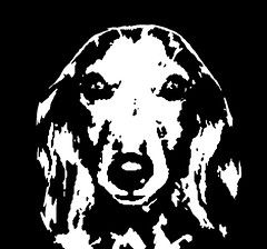 Dachshund Black & White Stencil Dog Art Print photo by Pupaya