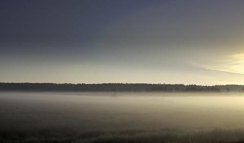 Misty Sammamish Valley