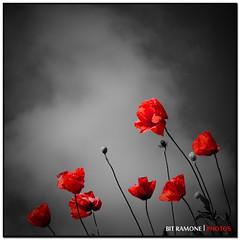 ligereza photo by bit ramone (off/on)