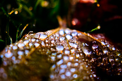 Explore # 19-Fall foliage with waterdroplets at dusk ~ bokeh abstract photo by Mrs Sarah Pierce Photography