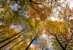 Canopy Colors photo by Matt Champlin