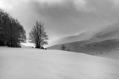 Black on White photo by A Cris ...I'm back...