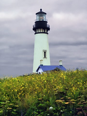 Lighthouse in a Field of Flowers, Yaquina Head Outstanding Natural Area, Coastline of Oregon, USA © 2009 Patrick Alan Swigart, Gone to Look for America photo by Patrick Alan Swigart