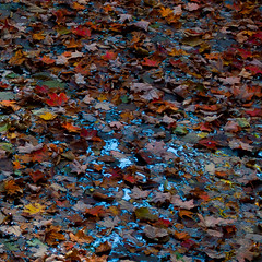 Still Leaves On Water photo by noahbw