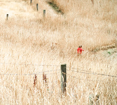 The Joy of Long Grass photo by Steve Taylor (Photography)