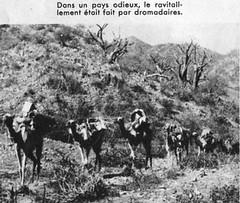 1941- Erythrée- ravitaillement - ADFL