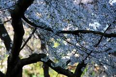 Jardin japonais photo by gherm