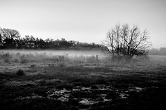 BW FOG photo by dominick toscano