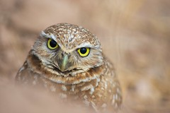 Owl's Eyes photo by Insu Nuzzi