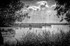 De Eemvallei . photo by Wouter van Wijngaarden