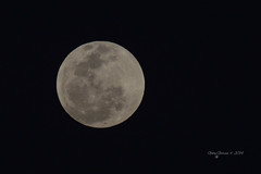 Full Moon photo by Gaviotita