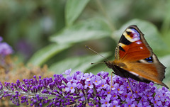 Butterfly photo by Mike Docherty