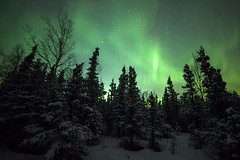 Northern Lights photo by Critter Seeker