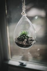 hanging succulent photo by Beth Kirby | {local milk}
