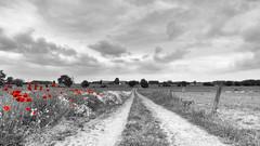Rural landscape photo by TouTouke - Nightfox