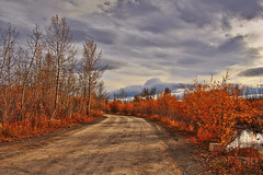 Autumn Road photo by LostMyHeadache: Absolutely Free *