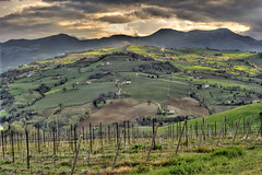 Colline Marchigiane photo by emorpi