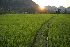 Sunsetting over rice fields photo by Noel Molony