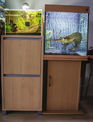 My 2nd Aquarium photo by Studio Skwit