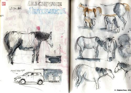 Etudes equestres & Intermarché