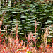 Lilies and red sedge - autumn reflection