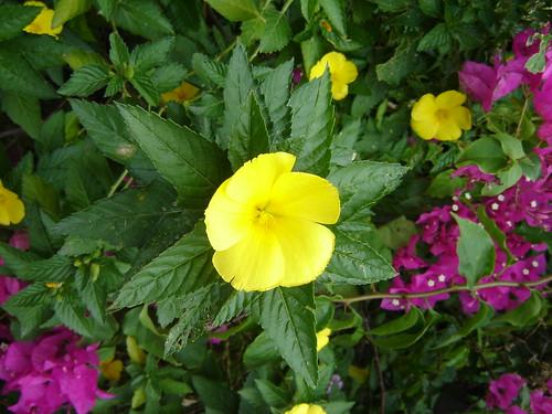 A flower post