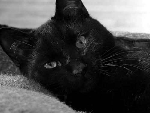 mostly relaxed Oskar