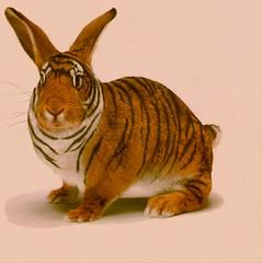 Bengalischer Hase